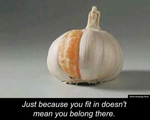 [Image] On Fitting In