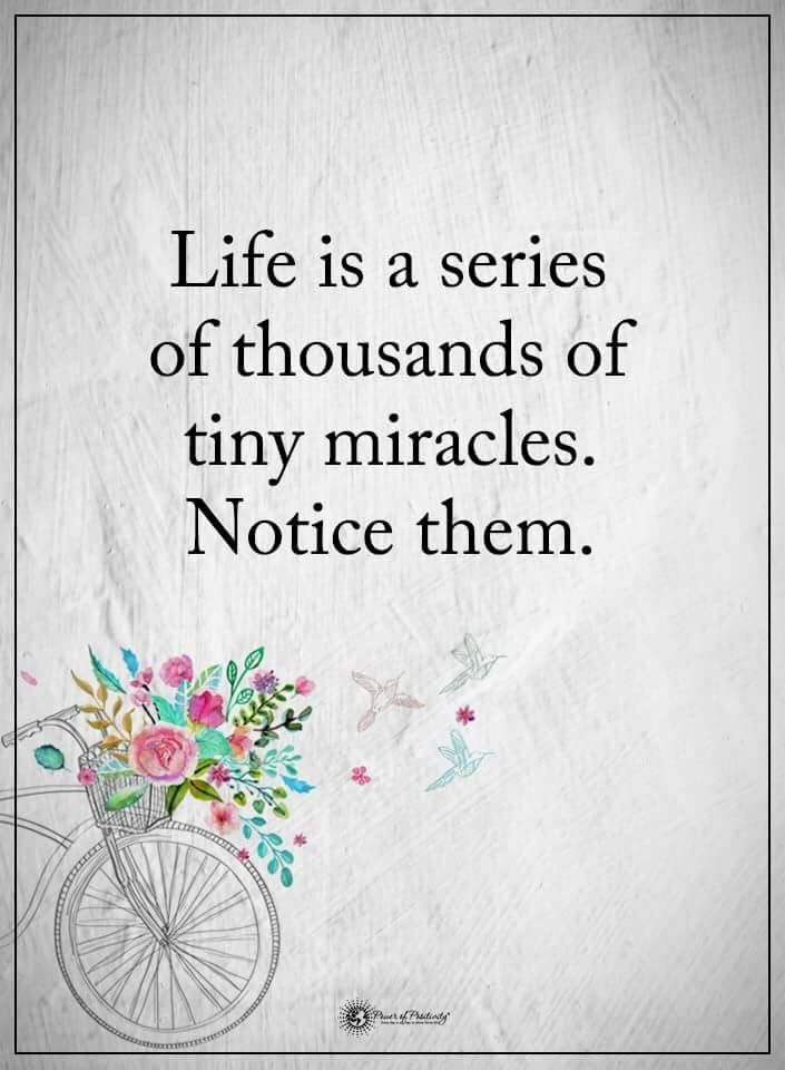 Life is a series of thousands of tiny miracles.  Notice them.