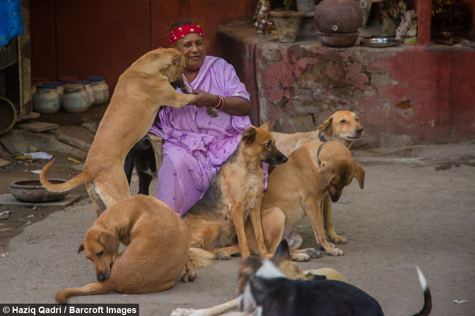 [Image] This 65 year old Indian woman sells scraps for Living and still manages to feed and look after 400 stray dogs!