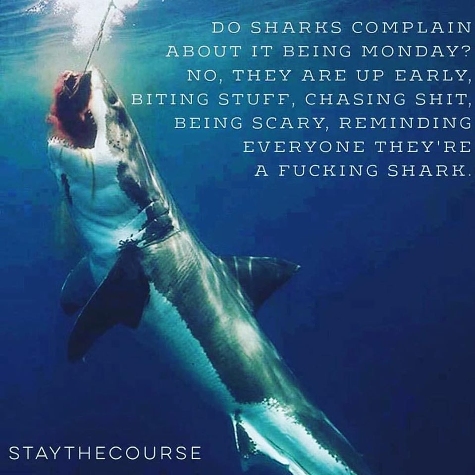 [Image] Sharks were born swimming