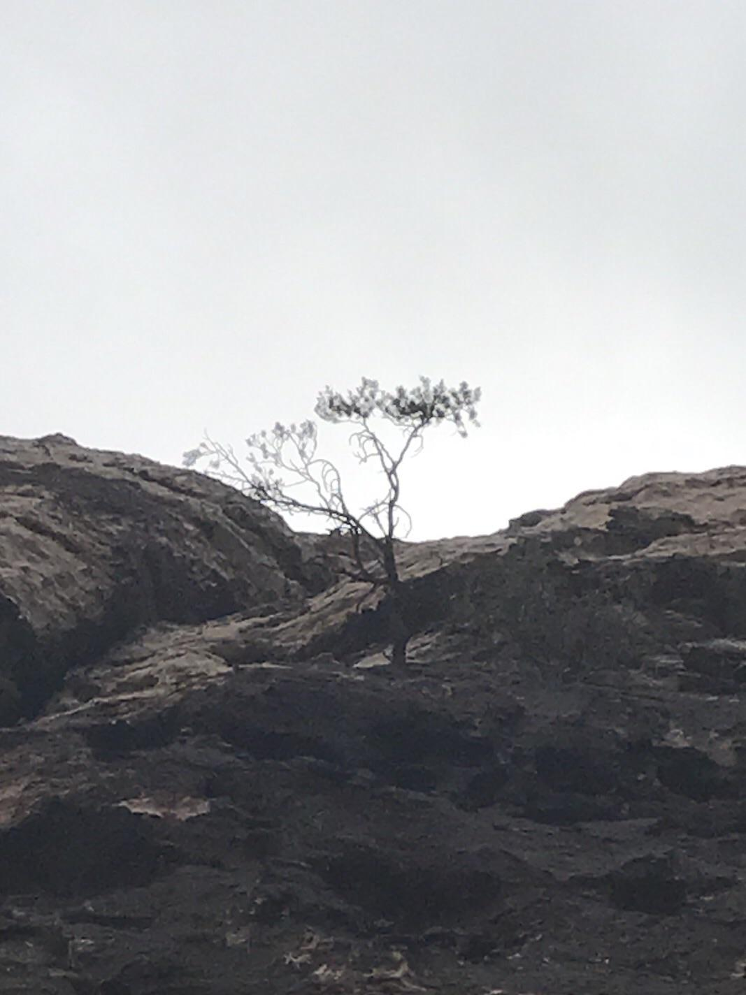[Image] Don't wait for the right environment. Grow where you are! (Red Rock)