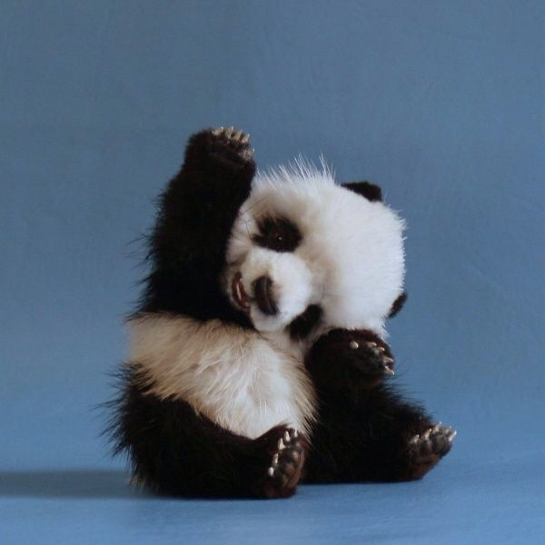 [Image] This baby panda is cheering for you because you can do anything!