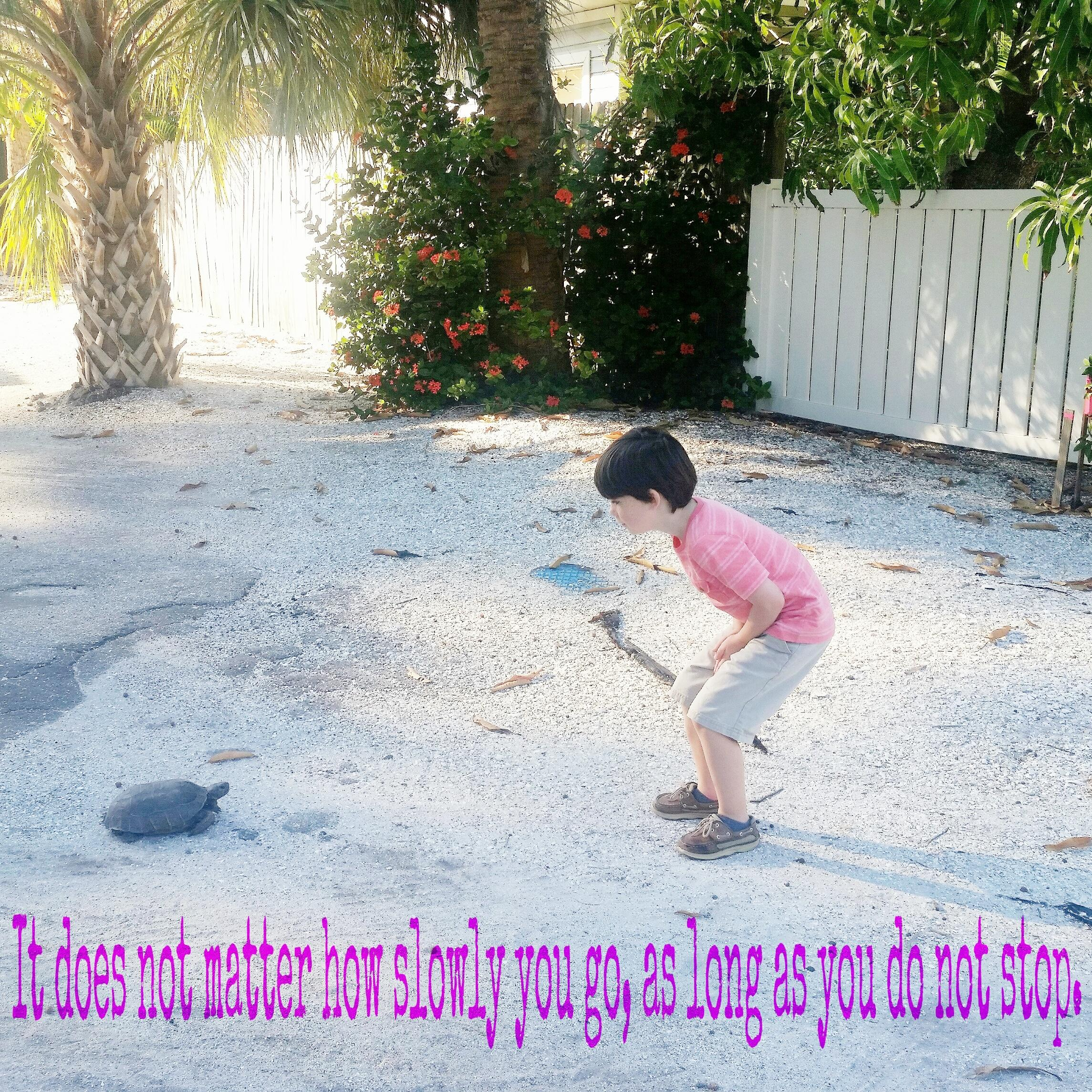 My son cheered on a turtle crossing the road, we can all use a little encouragement! [IMAGE]