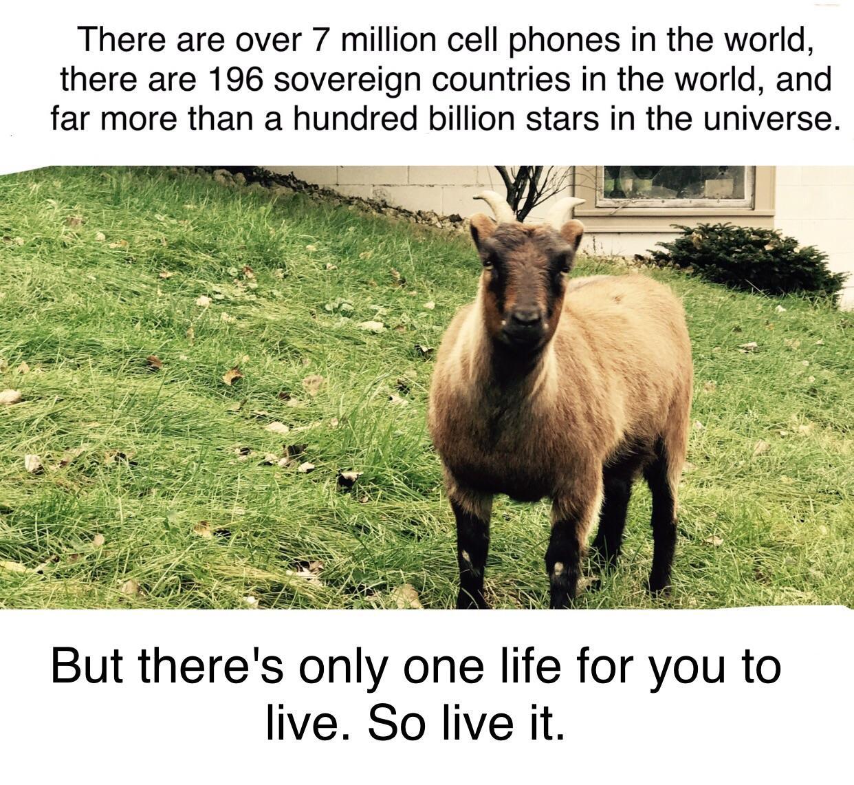 [Image] Live life.