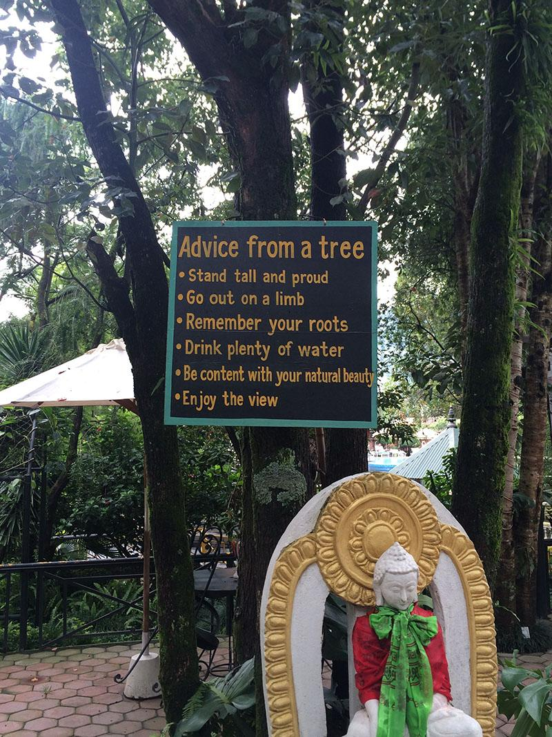 [image] A tree in kathmandu,nepal had some advice