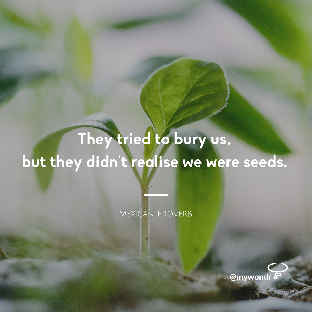They Tried To Bury Us, But They Didn't Realise We Were Seeds.