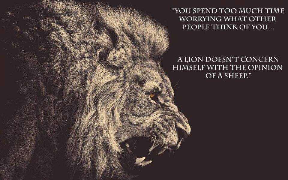 A Lion Does Not Concern himself With The Opinions of Sheep