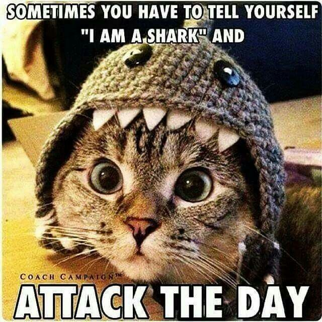 [Image] Attack the Day