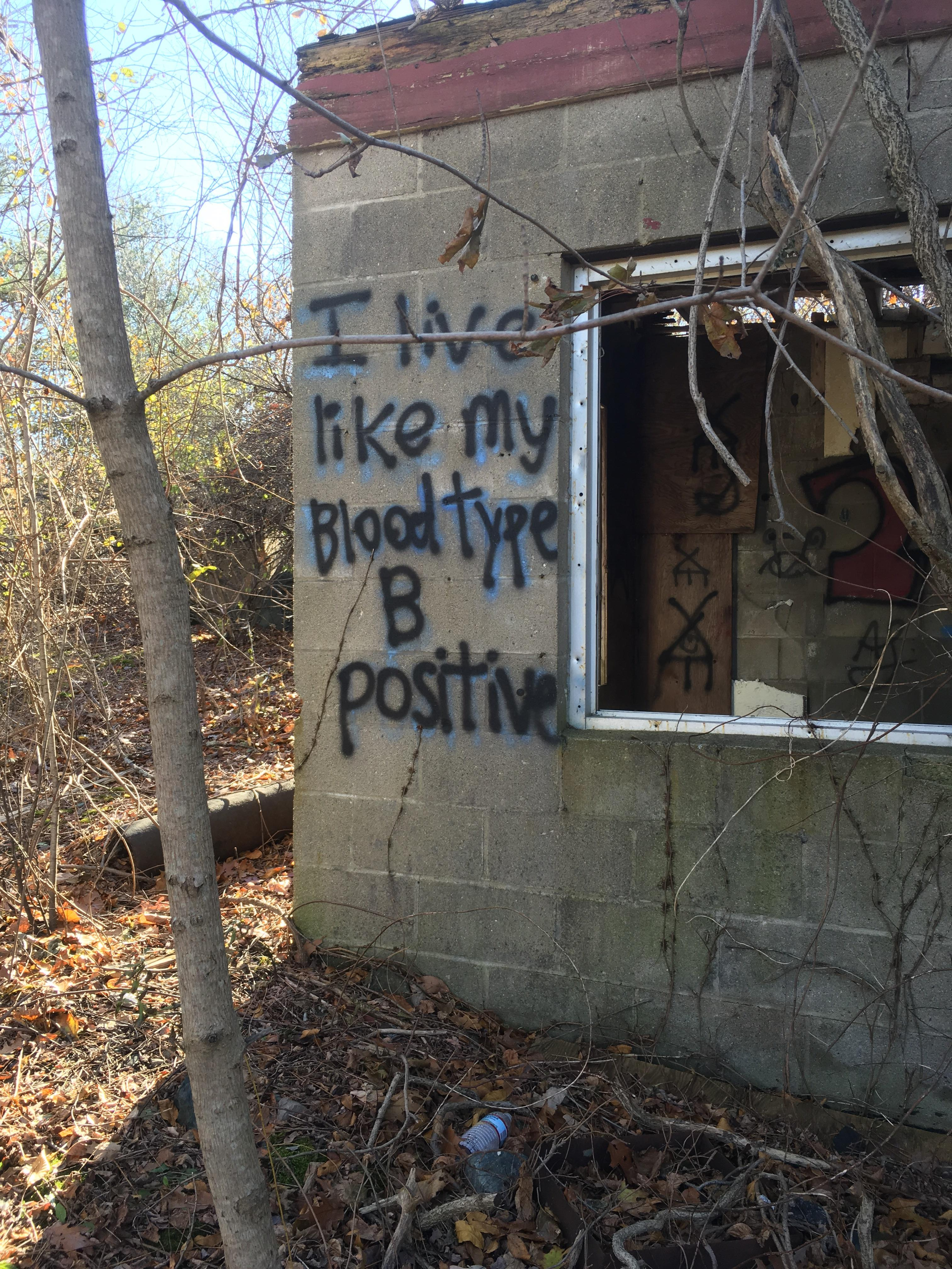 [image] this graffiti in the woods
