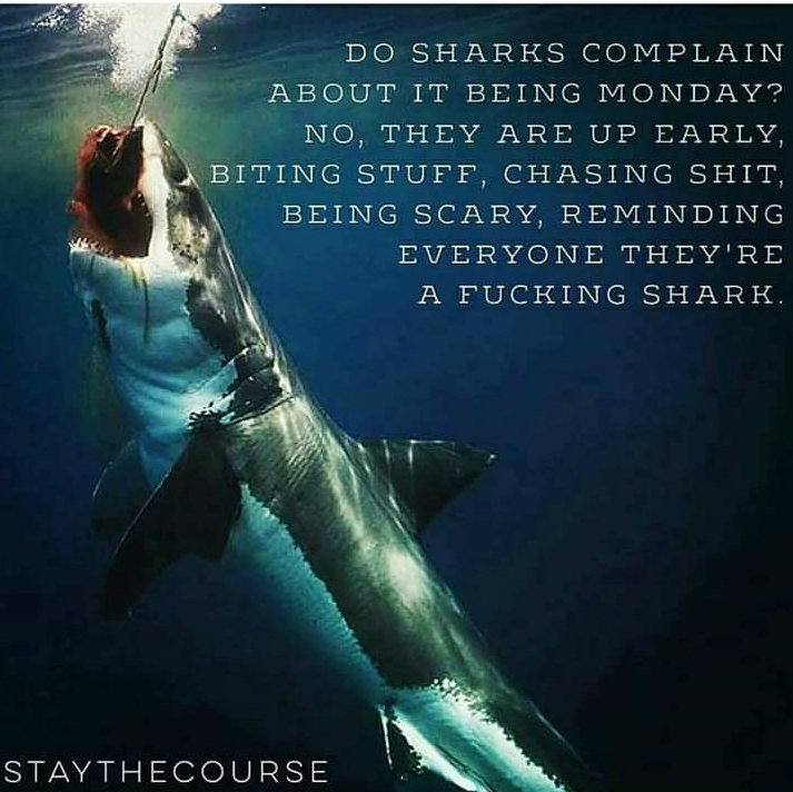 [Image] be like a shark