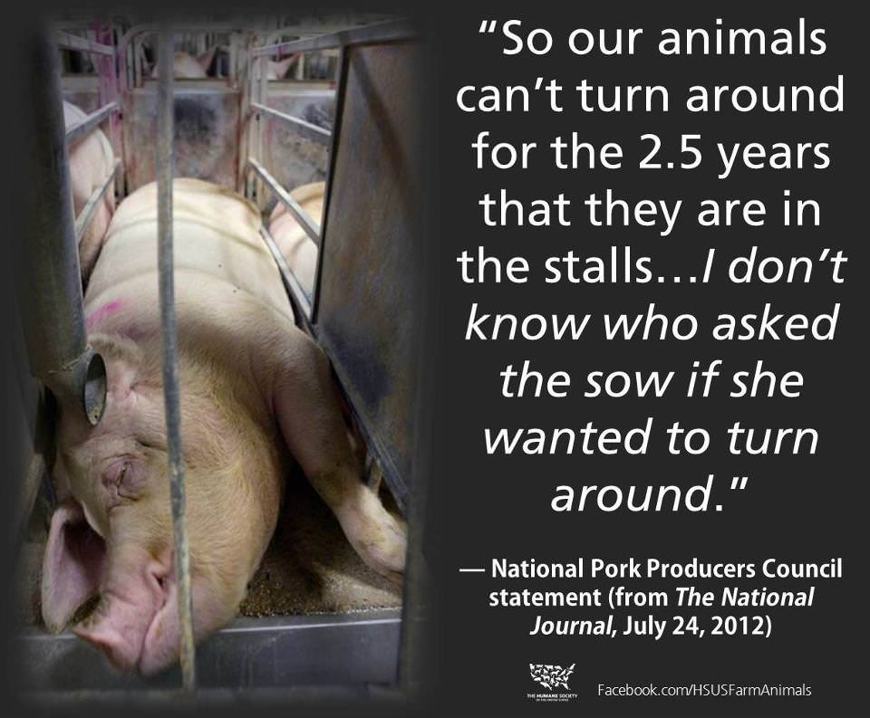 """So our animals can't turn around for the 2.5 years that they are in the stalls…"" -National Pork Producers Council [960×793]"