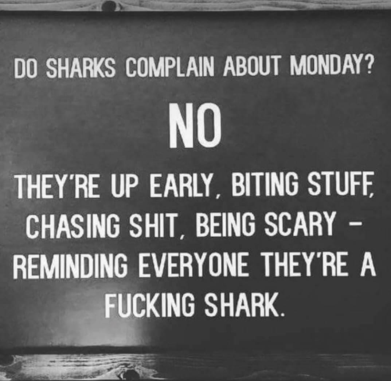[Image]Do the sharks complain?