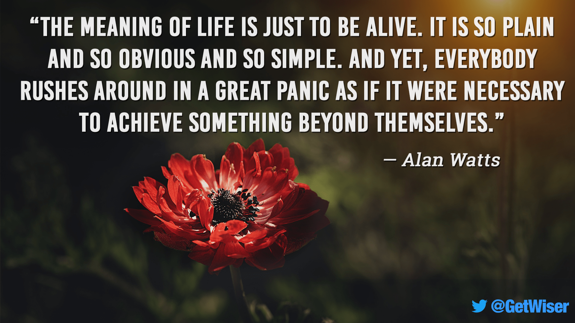 """The meaning of life is just to be alive. It is so plain…"" – Alan Watts [1920×1080]"