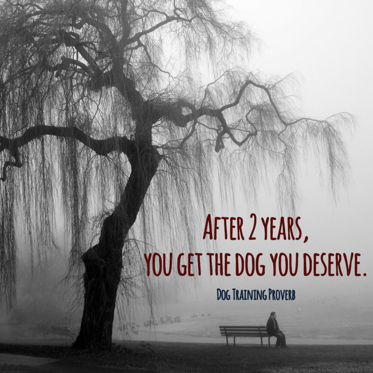 """After 2 years, you get the dog you deserve."" – Dog Training Proverb [1242×1242]"