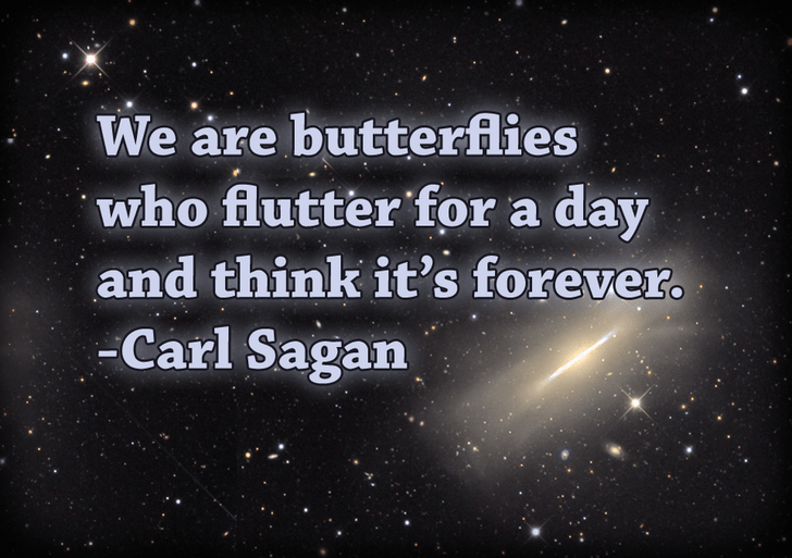 We are butterflies who flutter for a day and think it's forever. – Carl Sagan [ OC ] [ 728 x 513]