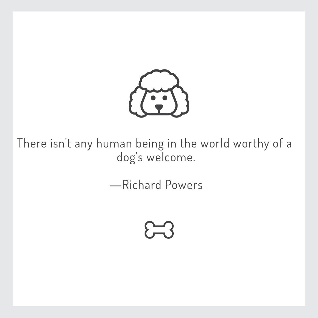 There isn't any human being in the world worthy of a dog's welcome – Richard Powers [1080*1080]