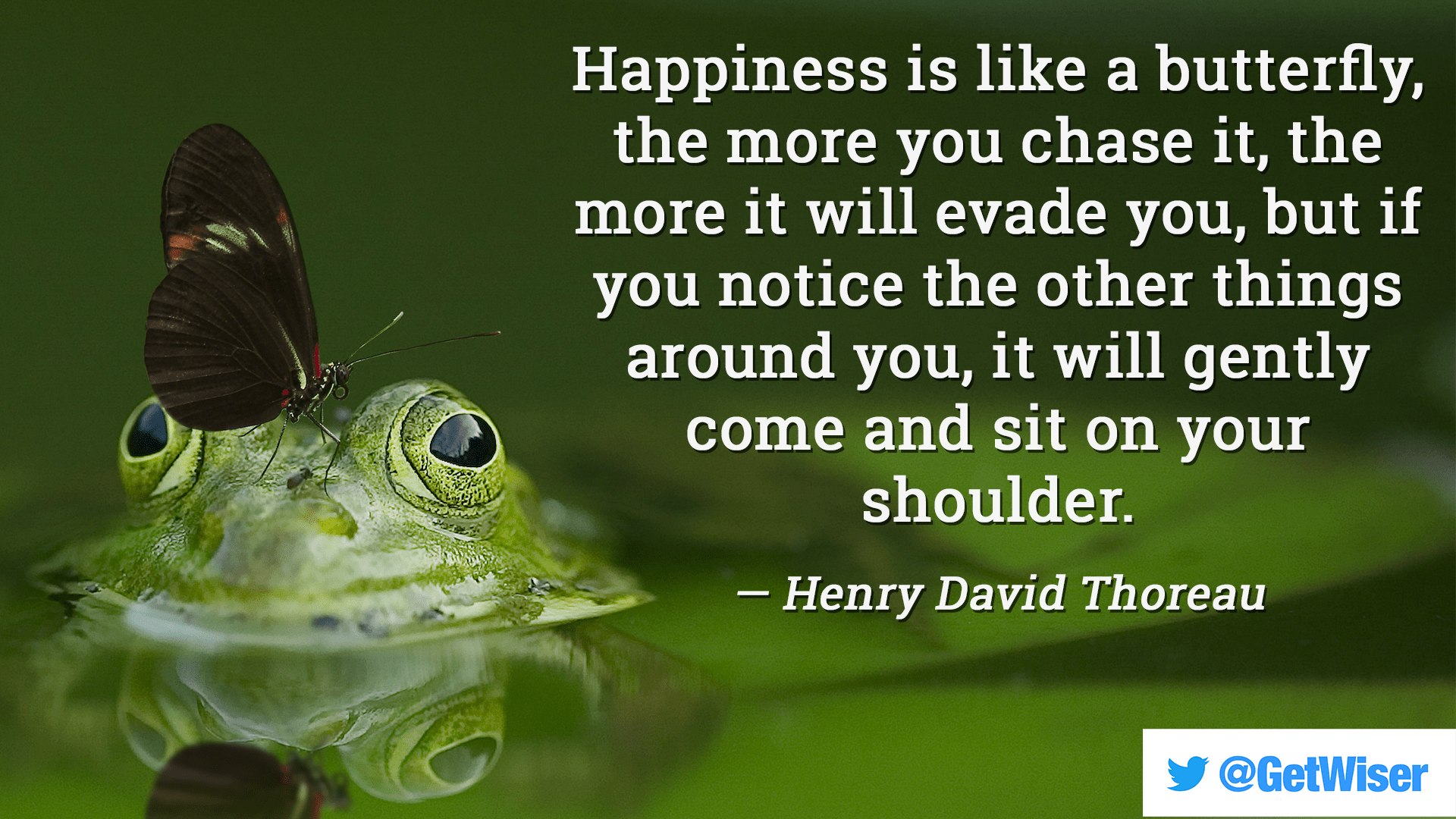 Happiness is like a butterfly, the more you chase it, the more it will evade you, but if you notice the other things around you, it will gently come and sit on your shoulder. — Henry https://inspirational.ly