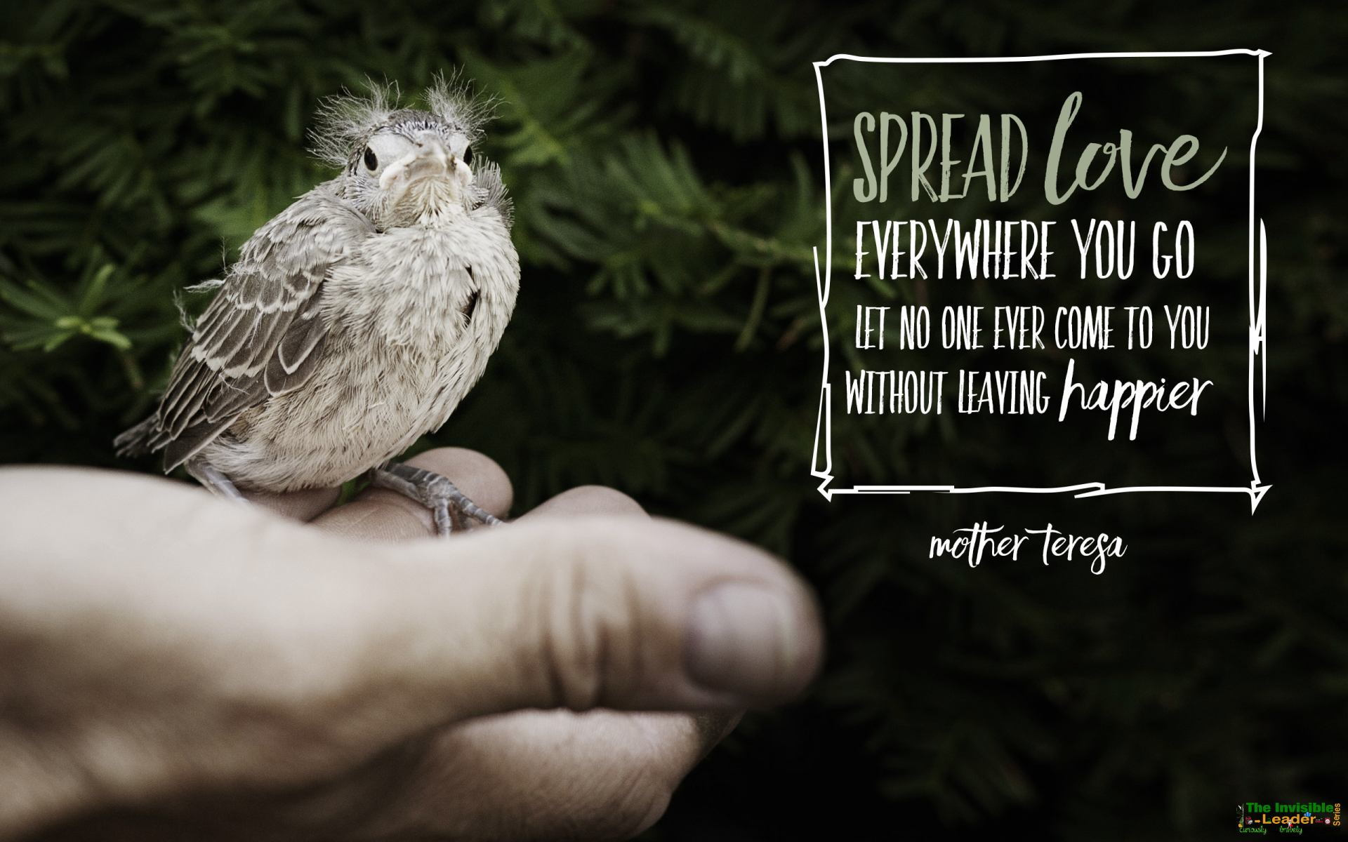 "[Image] DAILY FAMOUS QUOTE: ""Spread love everywhere you go let no one ever come to you without leaving happier"" Mother Tereza! [1920×1200]"