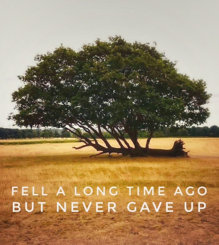 [IMAGE] Never gave up