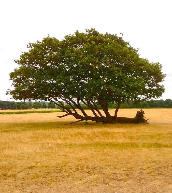 [Image] A tree got uprooted for a long time, but that didn't stop it from growing again