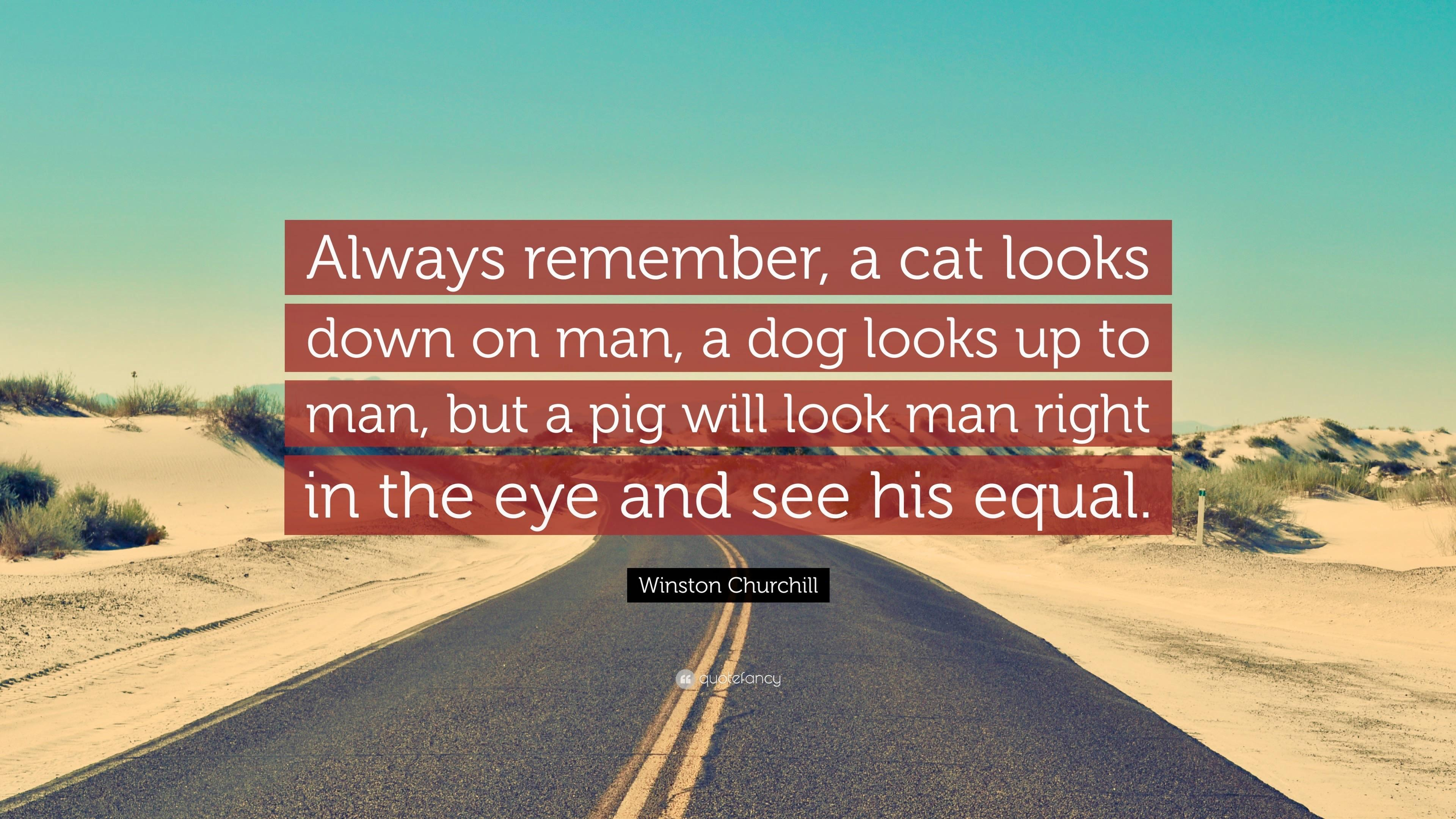 """Always remember, a cat looks down on man…"" -Winston Churchill [1000X500]"
