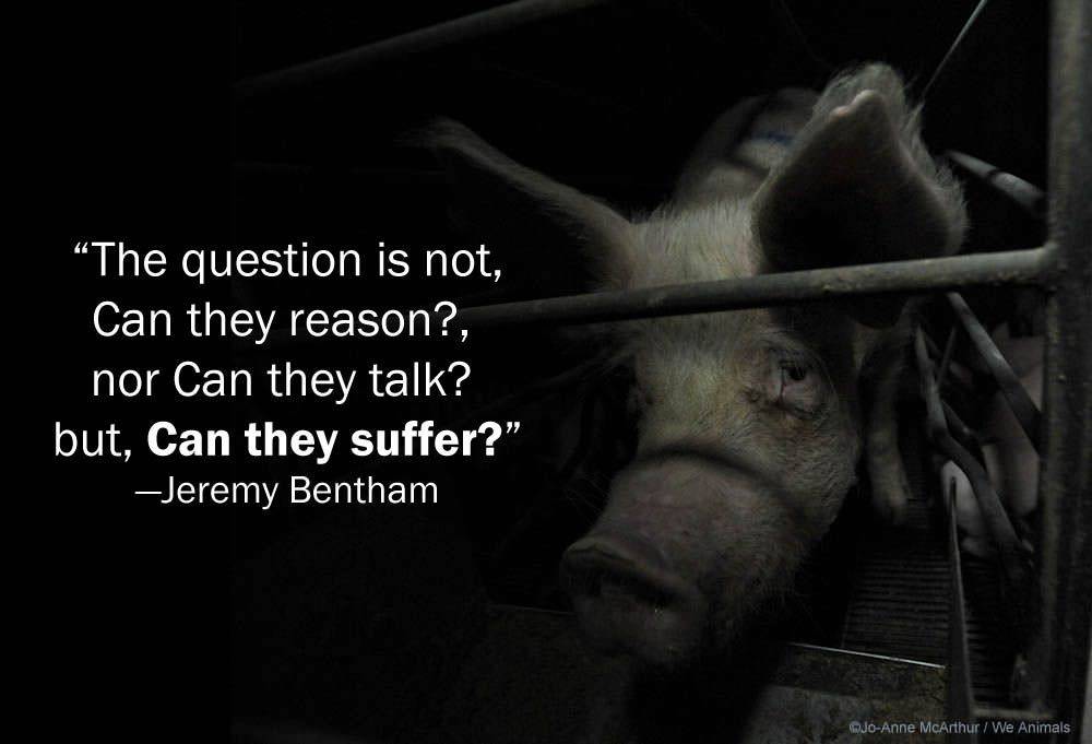 """The question is not, Can they reason?, nor Can they talk? but, Can they suffer?"" -Jeremy Bentham (1789) [1000 x 681]"