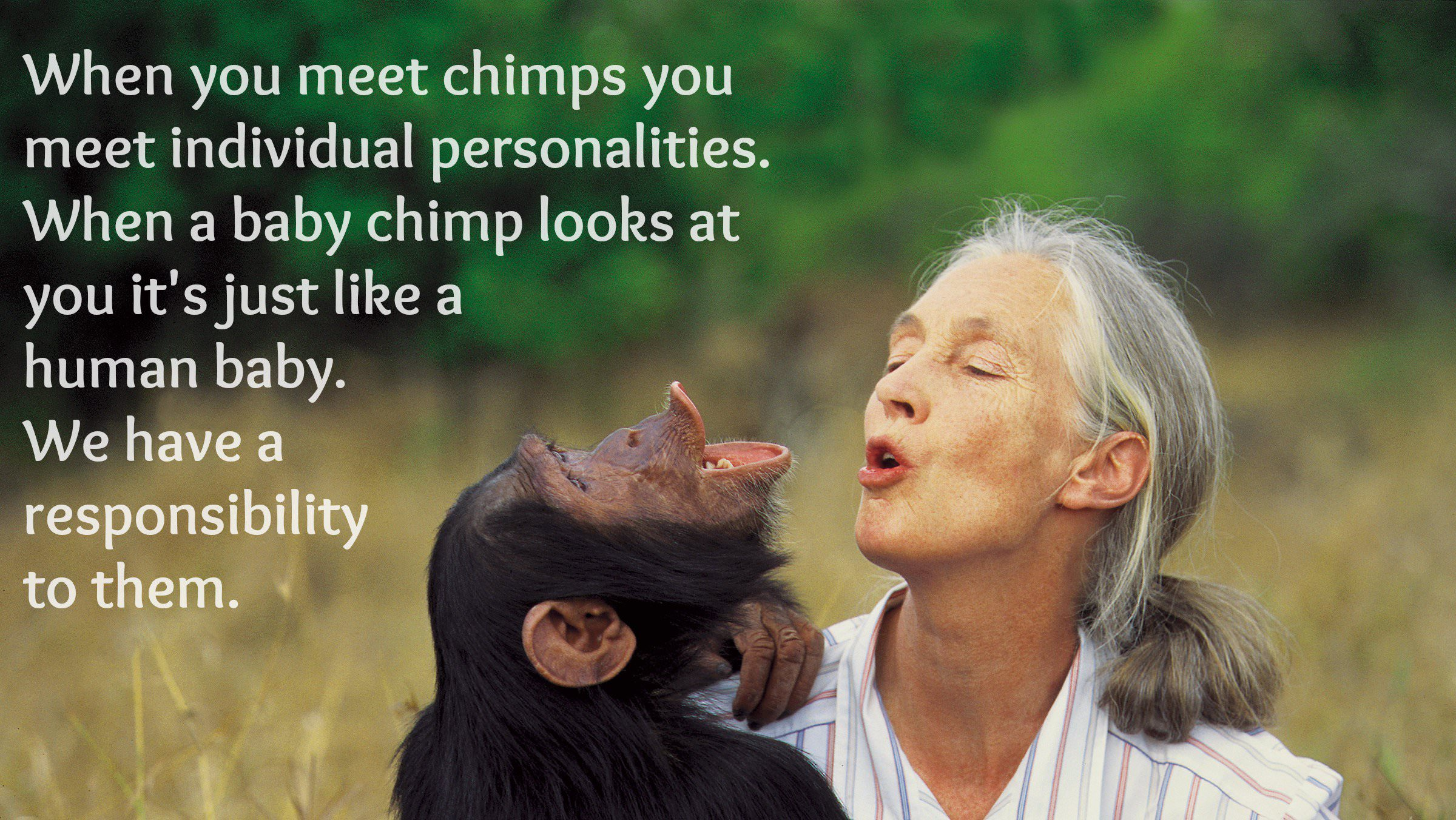 """When you meet chimps you meet individual personalities. When a baby chimp looks at you it's just like a human baby. We have a responsibility to them."" -Jane Goodall [2400×1352]"