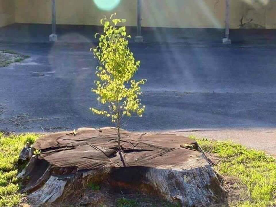 "[Image] ""No matter what happens in life; you can always start over."""