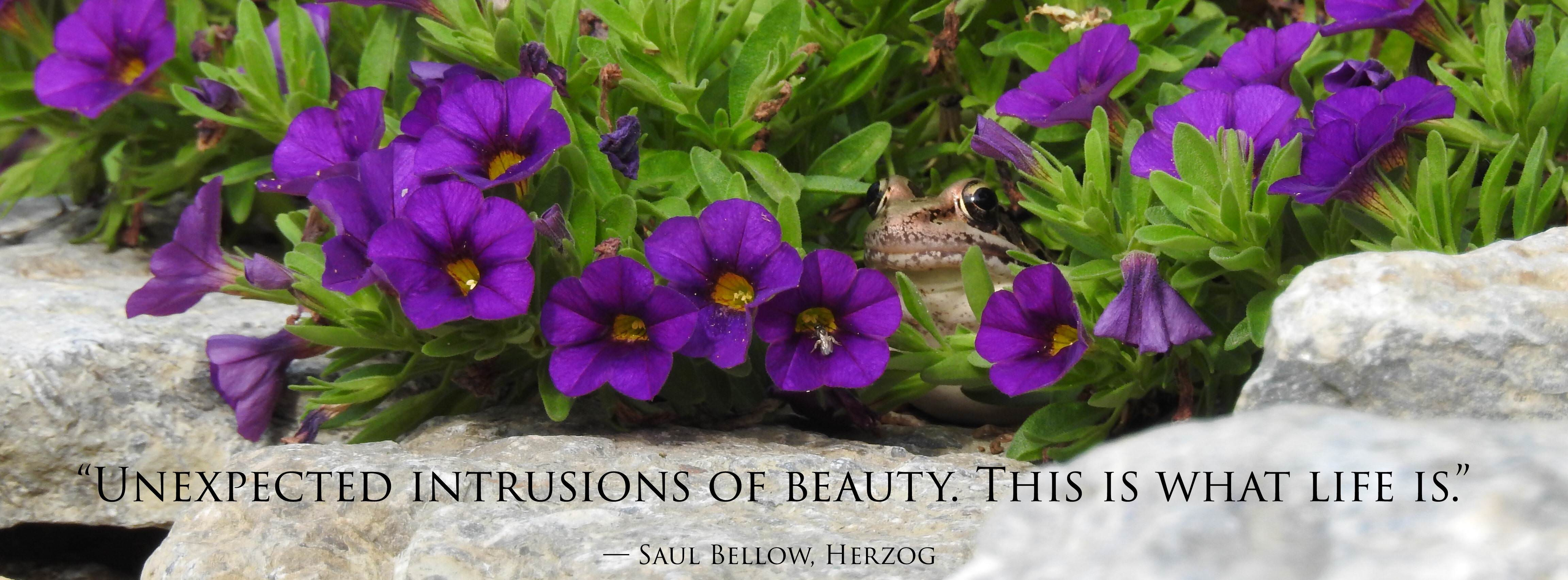 """Unexpected intrusions of beauty. This is what life is."" -Saul Bellow, Herzog [4608×1706]"