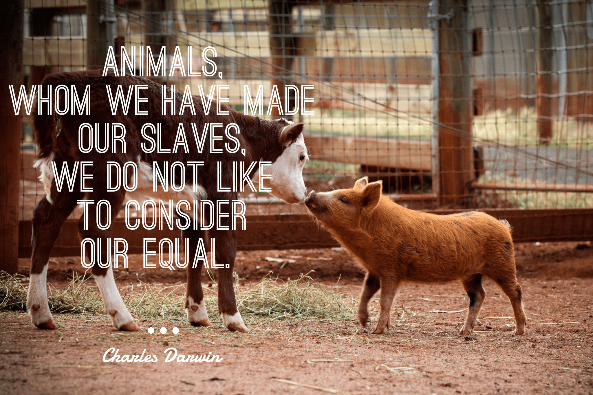 """Animals, whom we have made our slaves, we do not like to consider our equal."" -Charles Darwin [2048×1365]"