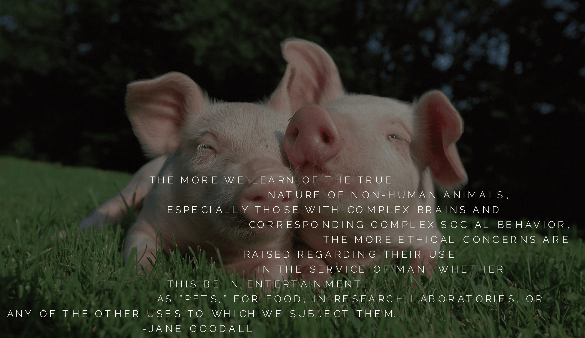 """The more we learn of the true nature of non-human animals, especially those with complex brains and corresponding complex social behavior, the more ethical concerns are raised regarding their use in the service of man…"" -Jane Goodall [2048×1183]"