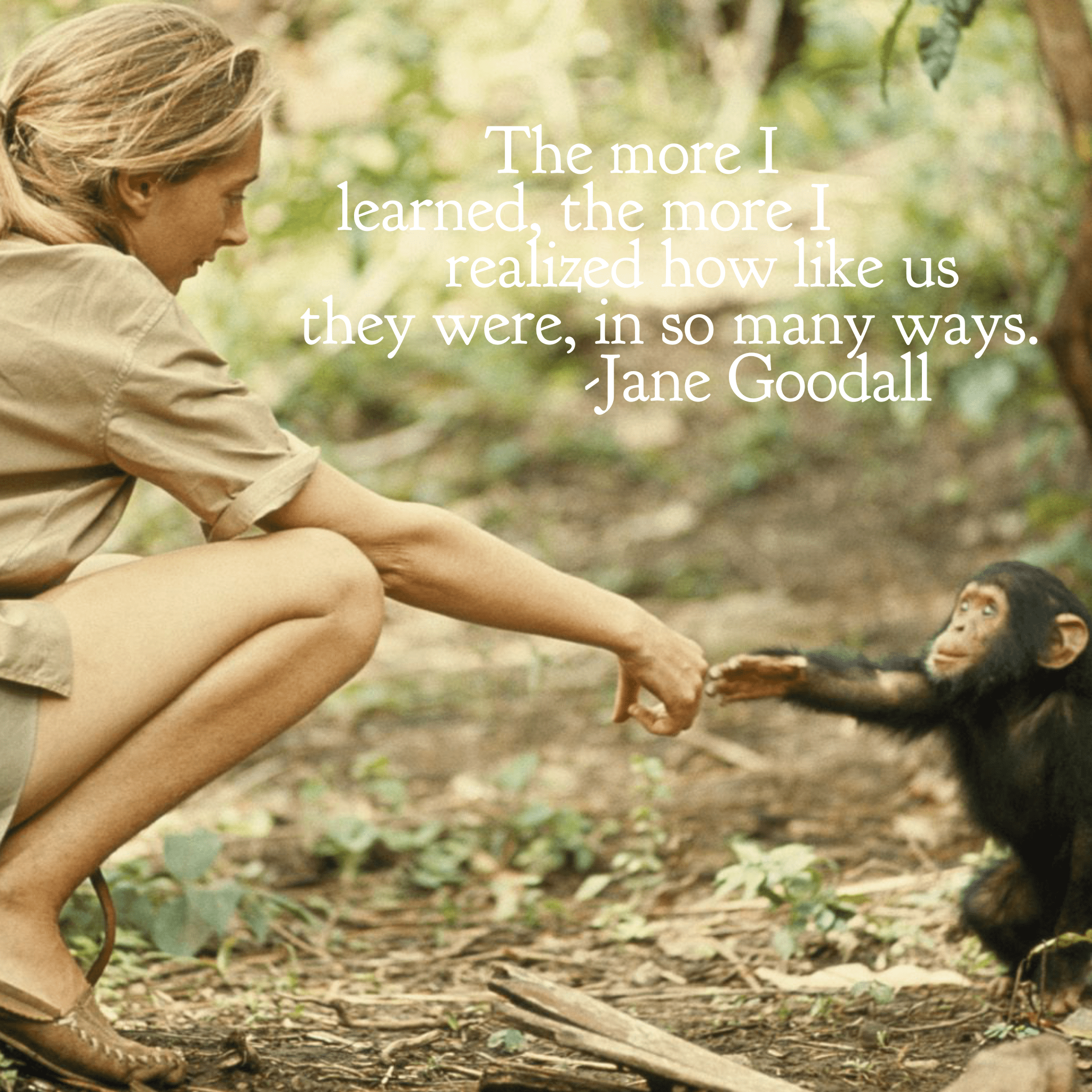 """The more I learned, the more I realized how like us they were, in so many ways."" -Jane Goodall [2048 x 2048]"