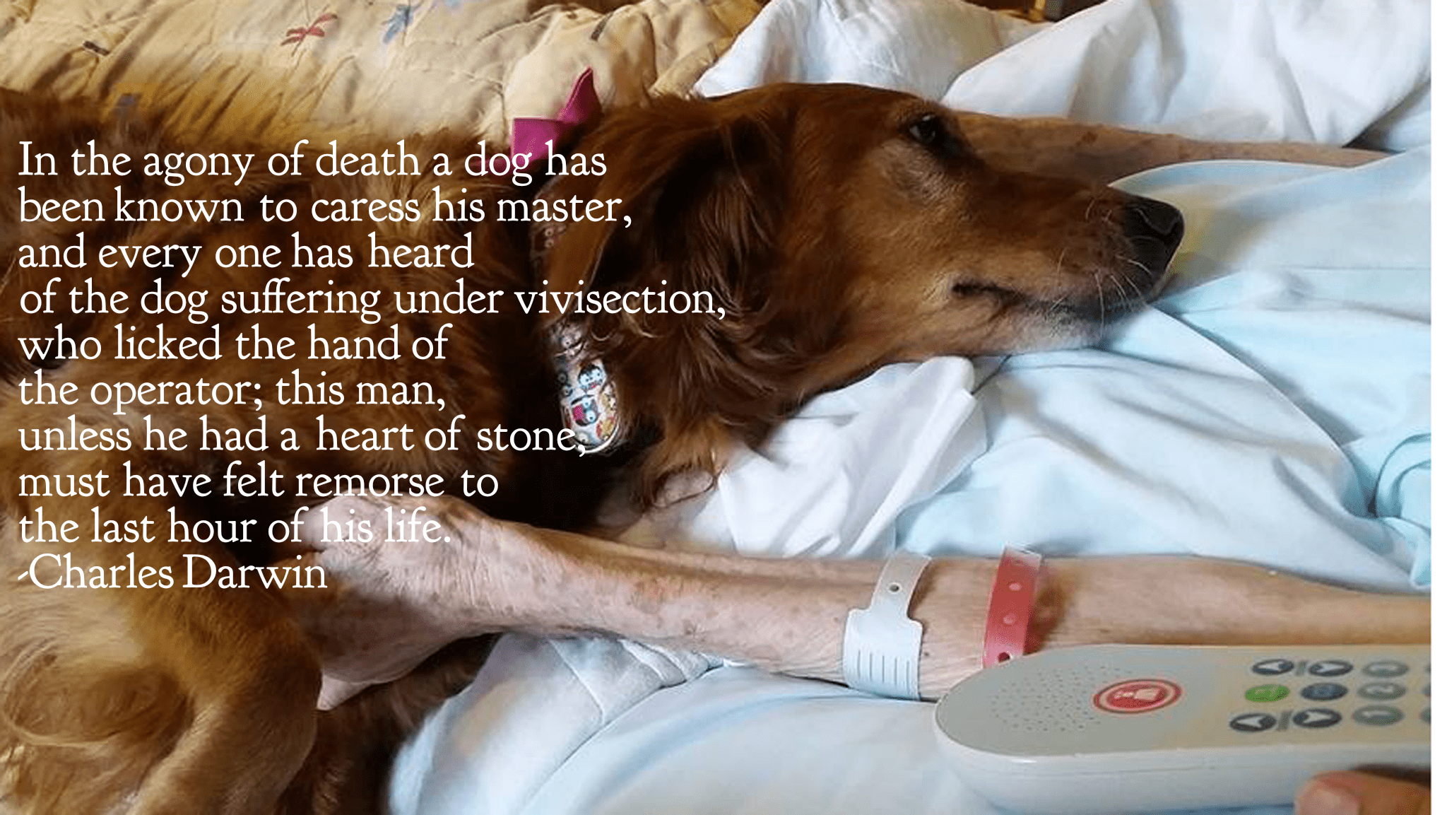 """In the agony of death a dog has been known to caress his master, and everyone has heard of the dog suffering under vivisection, who licked the hand of the operator; this man, unless he had a heart of stone, must have felt remorse to the last hour of his life."" -Charles Darwin [2048×1153]"