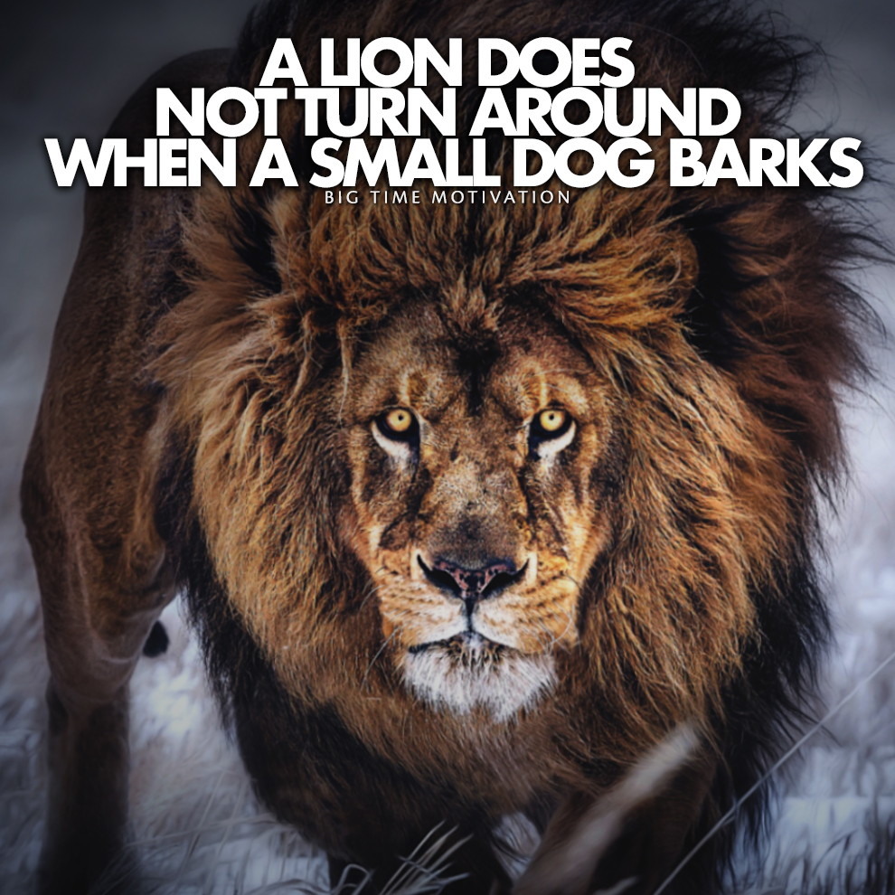[Image] A Lion Does Not. [OC]