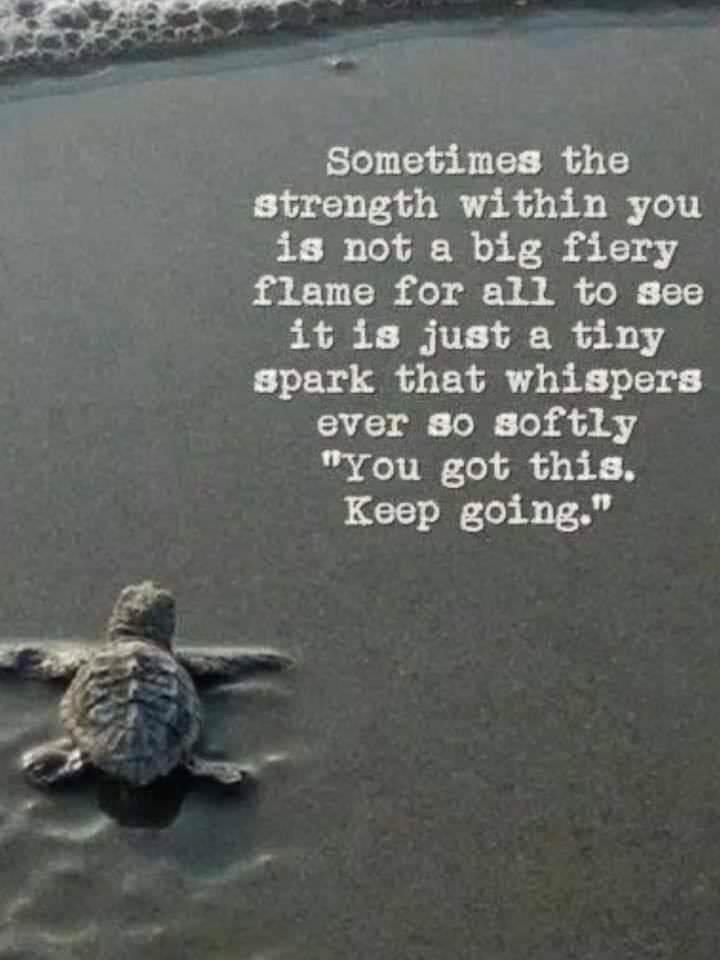 [Image] Slow but Steady