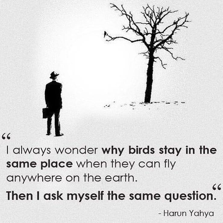 [image] Stretch your wings and fly