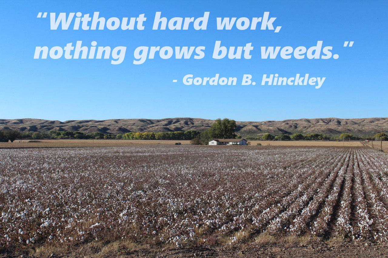 """Without hard work, nothing grows but weeds."" – Gordon B. Hinckley [OC] [1280×853]"