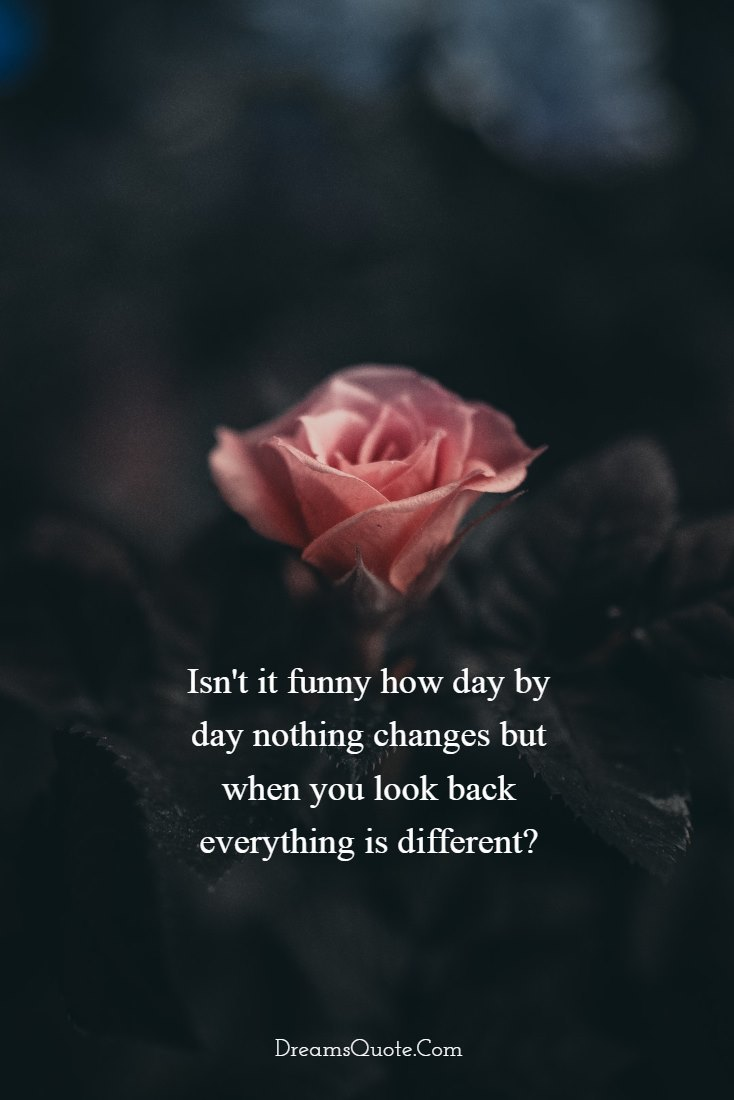 Isn't it funny how day by day nothing changes , but when you look back everything is different. – by C.S Lewis [734×1100]