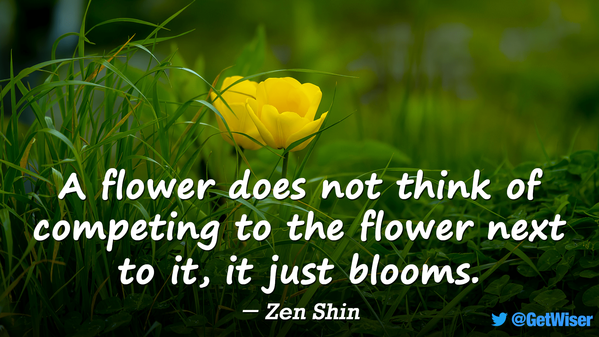 """A flower does not think of competing to the flower next to it, it just blooms."" – Zen Shin [1920×1080]"