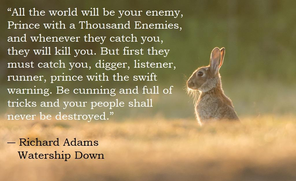 """All the world will be your enemy…"" – Richard Adams, Watership Down [1024 x 626] [OC]"