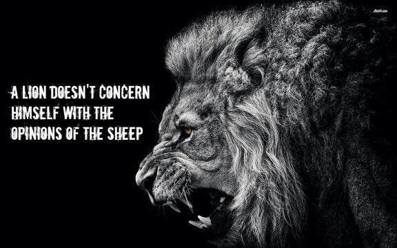 A lion doesn't concern himself with the opinions of the sheep – George R. R. Martin [576×360]