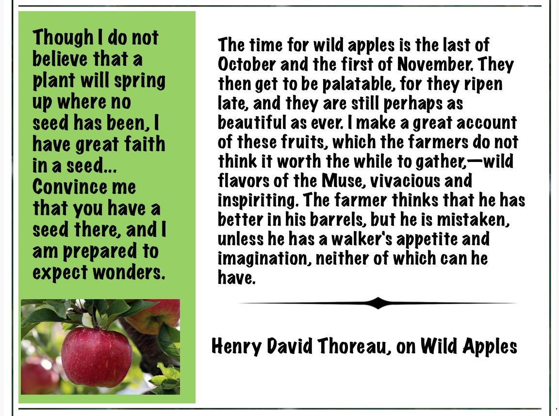 """ Though I do not believe that a plant will spring up where no seed has been, I have great faith in a seed…"" – Henry David Thoreau [1152 × 858]"