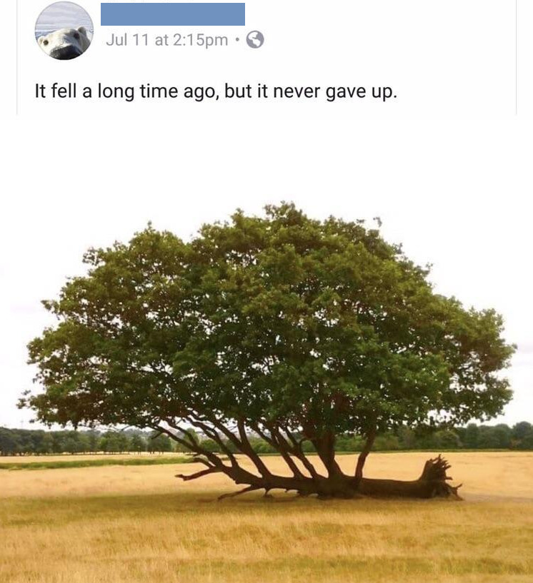 [Image] It doesnt matter if you fall, as long as you dont give up!