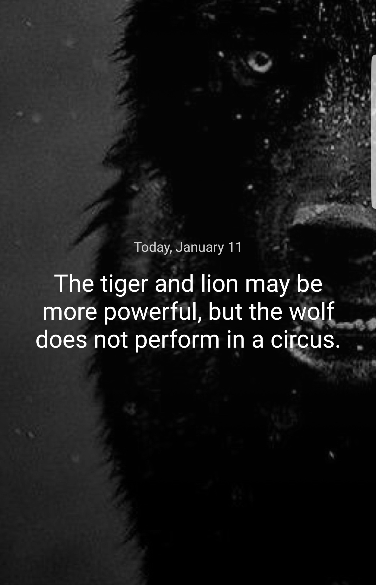 """Today, January 11 The tiger and lion may be more powerful, but the welt-"""" ' does not perform in a cirlcus. ' https://inspirational.ly"""