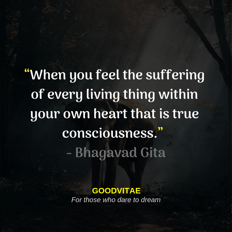 """When you feel the suffering of every living thing within your own heart… that is true consciousness."" ~ Bhagavad Gita [800X800]"