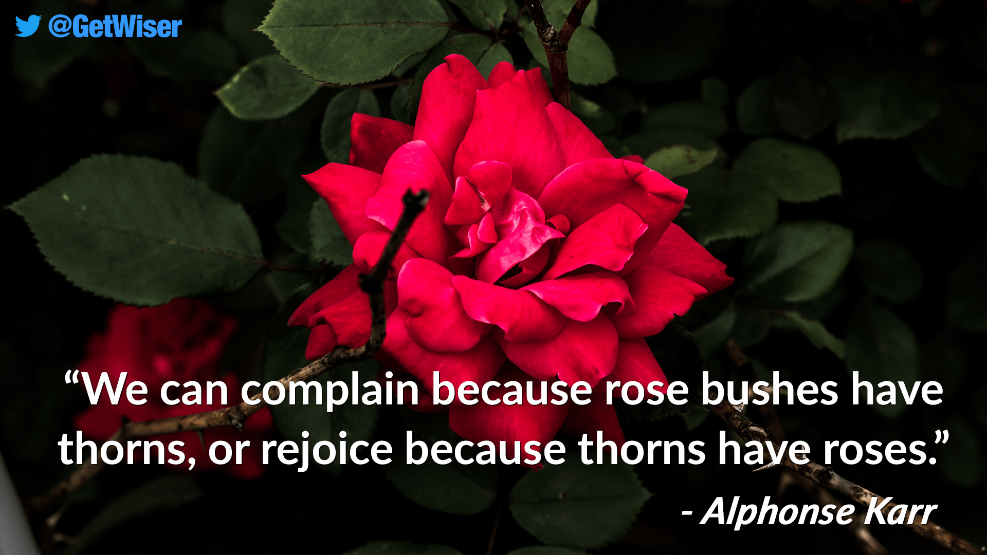 """We can complain because rose bushes have thorns, or rejoice because thorns have roses."" – Alphonse Karr [1920×1080]"