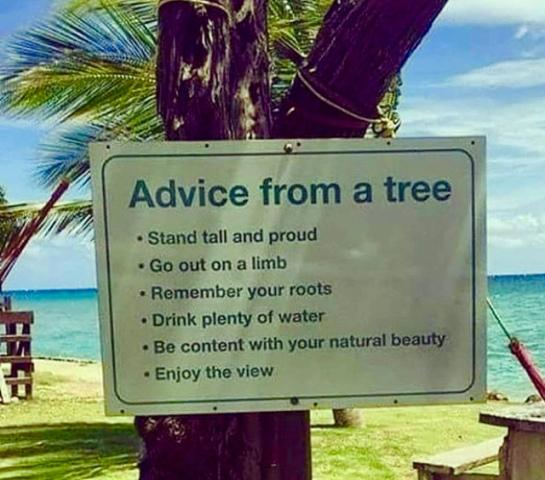 Advice From A Tree . Stand Tall And Proud - Go Out On A Limb - Remember Your Roots - Drink Plenty Of Water 0 80 Content With Your Natural Beauty - Enjoy https://inspirational.ly
