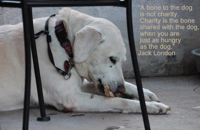 """A bone to the dog is not charity…"" -Jack London [640×416]"