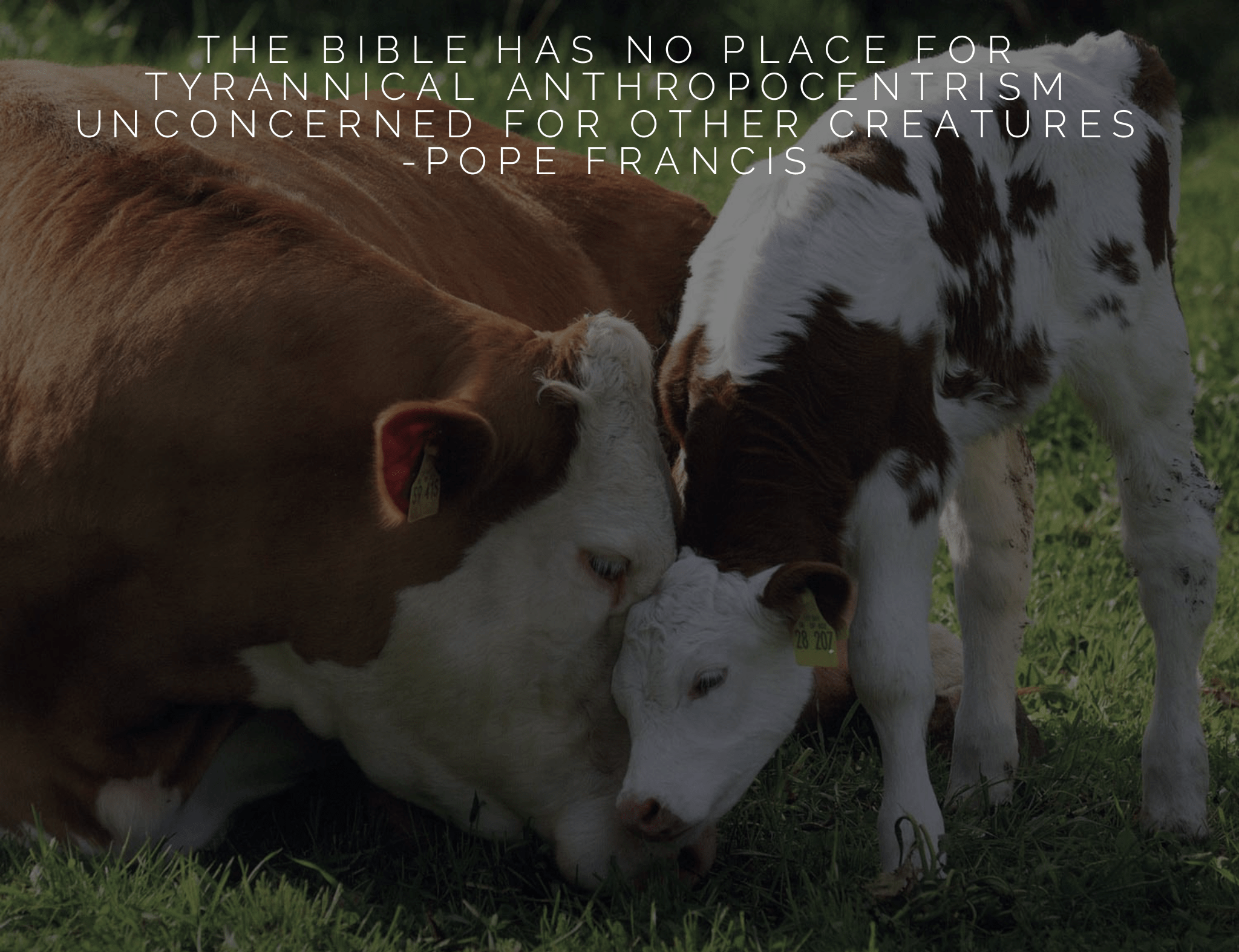 """The bible has no place for tyrannical anthropocentrism unconcerned for other creatures"" -Pope Francis [2048×1574]"