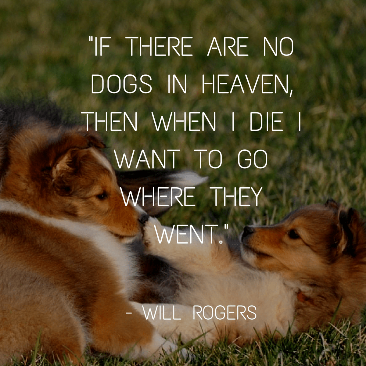 """If there are no dogs in heaven…"" — Will Rogers [1200×1200]"